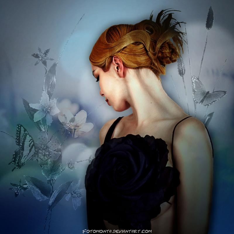Purple Rose by Fotomonta