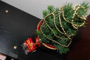 Little tree,little gift... by Indianwhitespirit