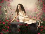 Fairy  Rose Garden