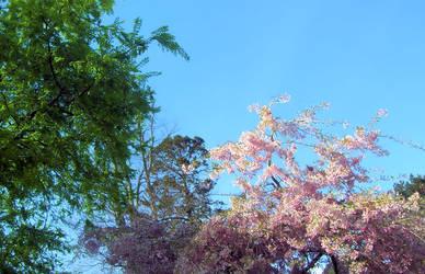 Spring by isawien-ilmen