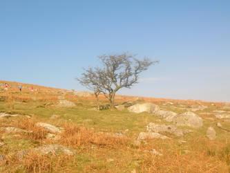 Lonely Tree by isawien-ilmen