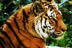 Tigre by Littlycloud