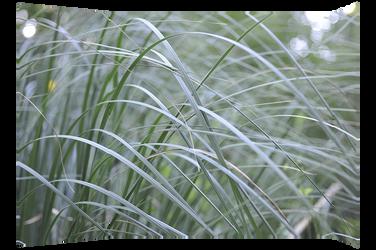 Grass cut by MissUmlaut