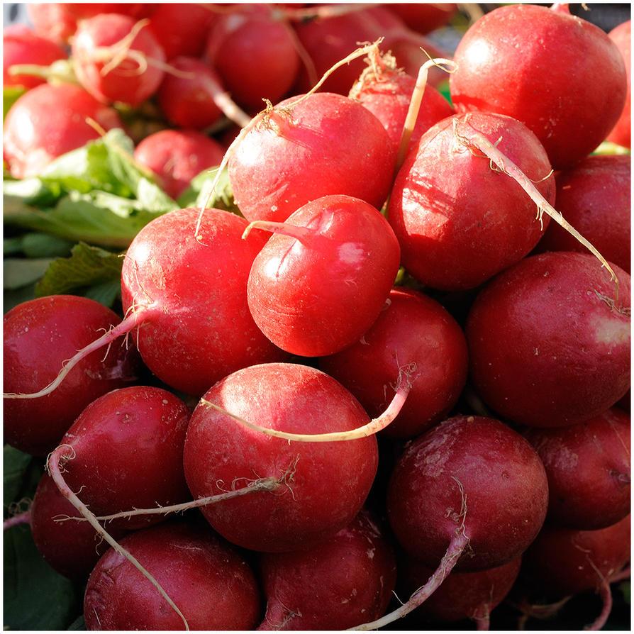 market radish by MissUmlaut