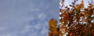 quercus robur with sky