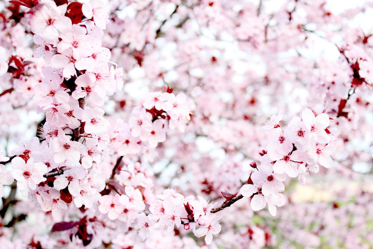 Plum Bouquet by Freudian-field-day