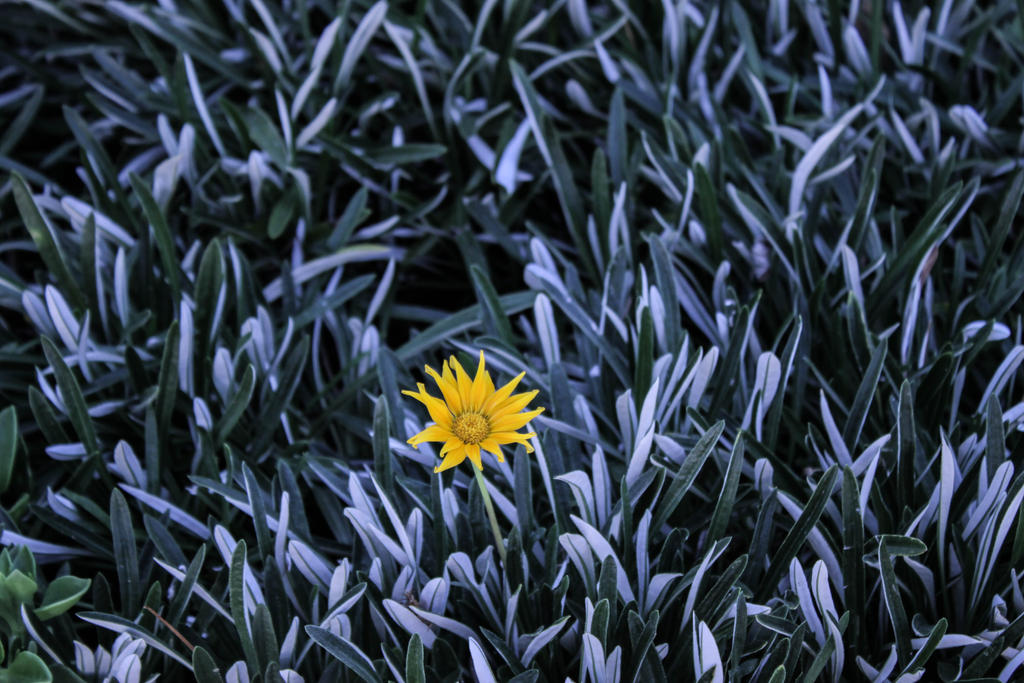 Lonely Little Petunia by Freudian-field-day