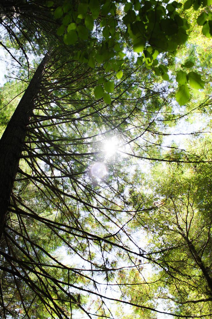 Light Ahead by Freudian-field-day