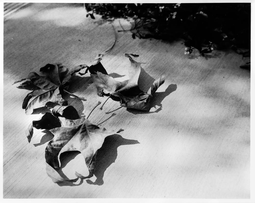 Fallen Leaves by Freudian-field-day