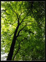 Look up to the treetops by nothingofvalue