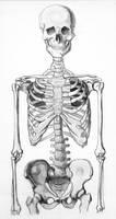 Skeleton Half