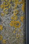 Moss texture 01