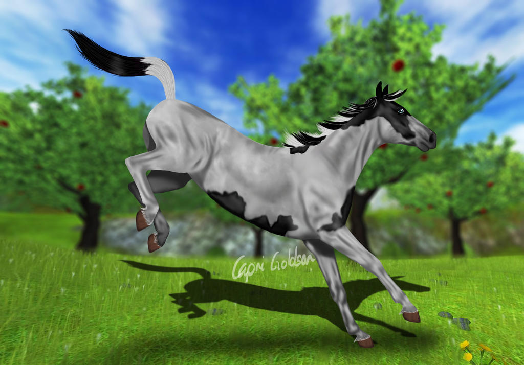 SSO American Paint Horse edit by LupusLynx