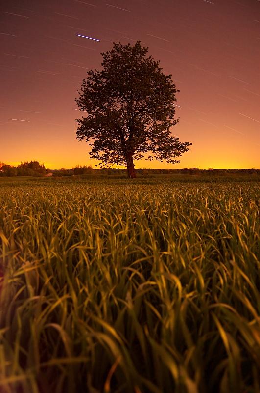 Nocy szept.. by Buszujacy-w-zbozu