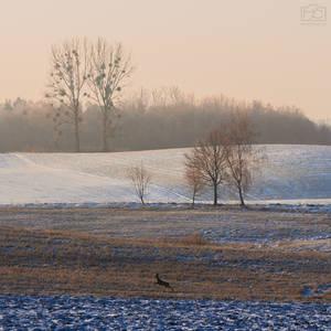 Frosty Morning III