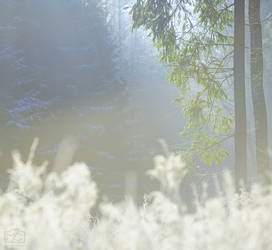 Frosty Morning IV
