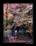 Enchanted Forest III