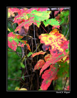 Those Autumn Leaves by David-A-Wagner