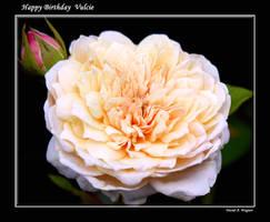 Happy Birthday Vulcie by David-A-Wagner