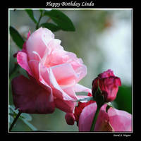Happy Birthday Linda by David-A-Wagner