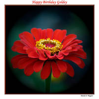 Happy Birthday Goldey by David-A-Wagner