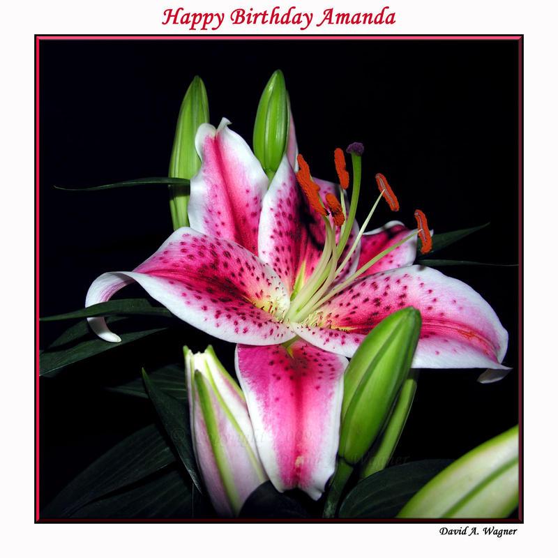 Happy Birthday Amanda by David-A-Wagner
