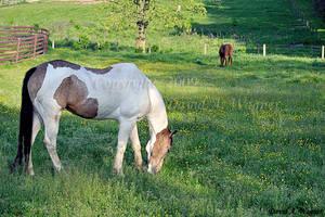 Happy Birthday Sweinhorse by David-A-Wagner