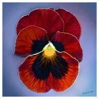 Happy Birthday Vera... by David-A-Wagner