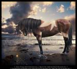 The Tutorial Horse
