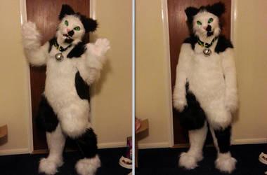 Jack the Cat - Fursuit by DarkieKun by Koiice