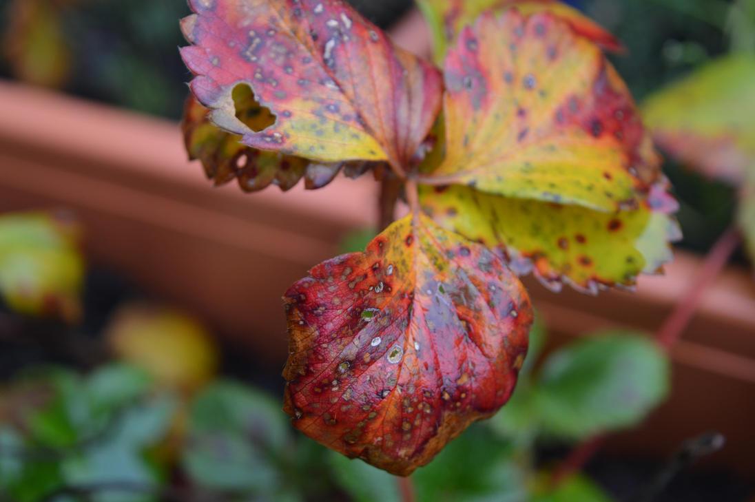 Autumn get's eaten away by Blacksoulofdeath