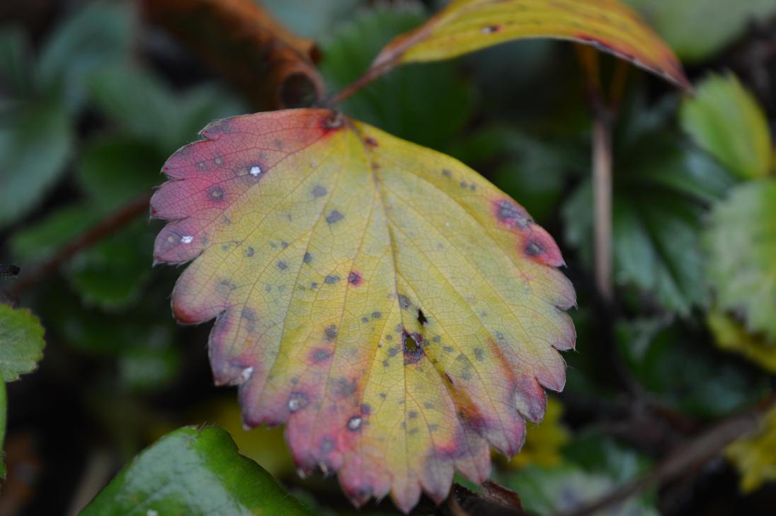 Autumn eats slowly by Blacksoulofdeath
