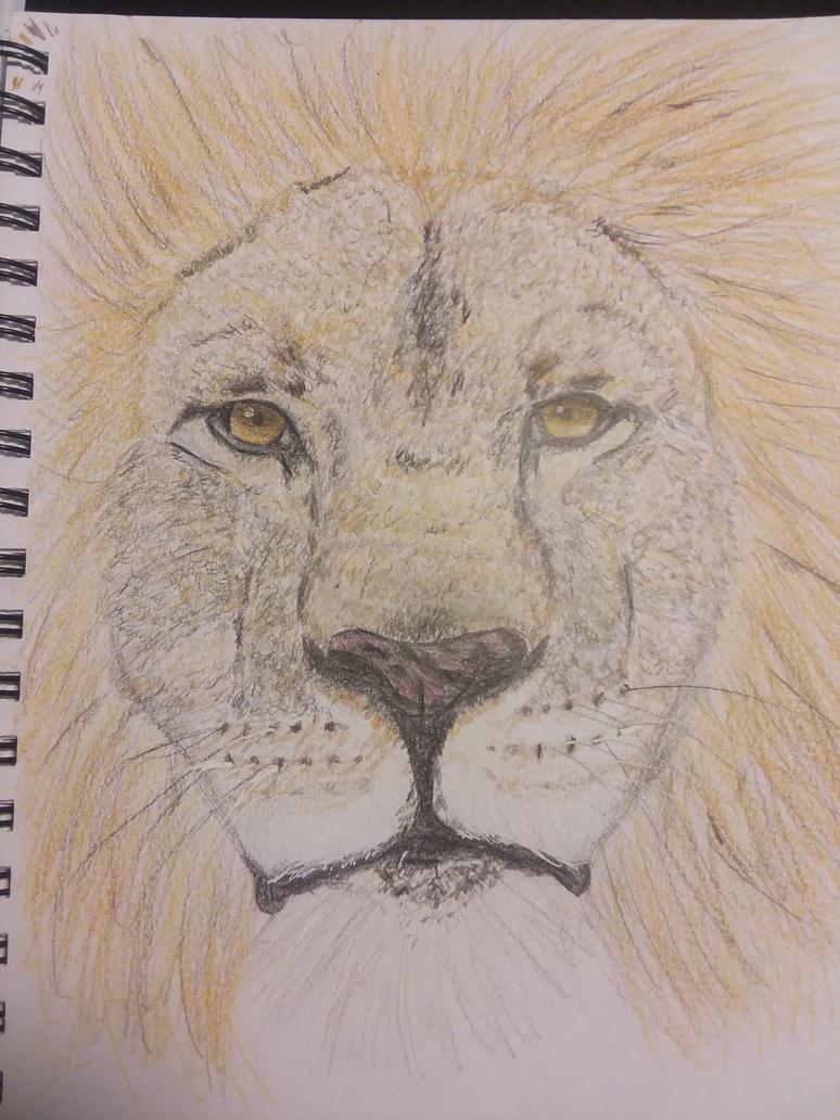 Lion by okamiJR