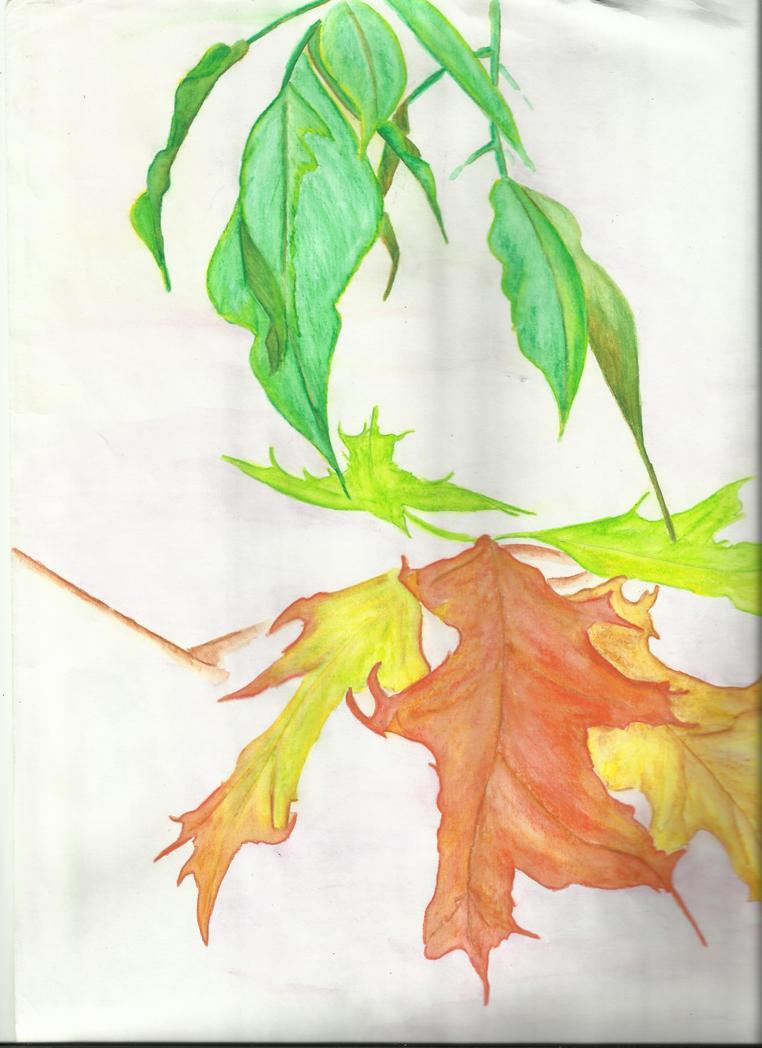 Autumn Leaves Study by auburn42