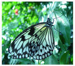 december butterfly
