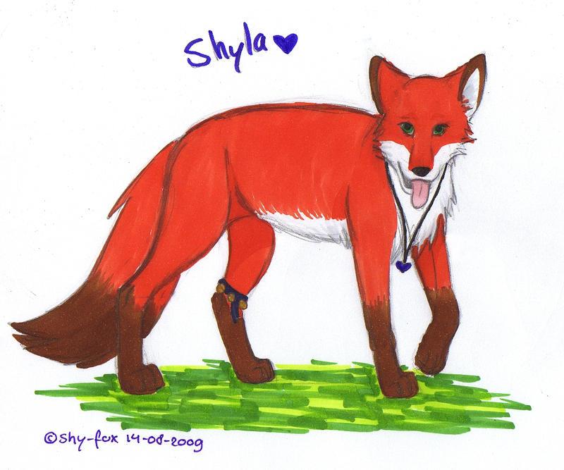 Shyla Shy Not About