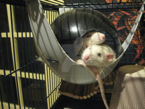 Hector and Firi Rat relaxing in the space pod.