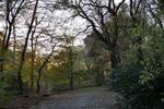Forest path around sunset 20/11/2020.