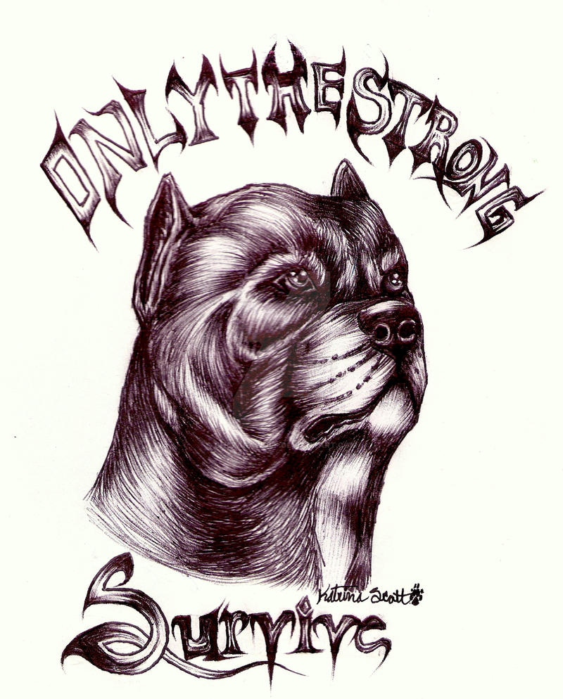Pit Bull Tattoo Design By Chezarawolf On Deviantart