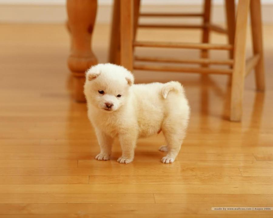 Cute and fwuffy puppy
