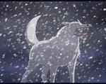 Kiba wolf's rain