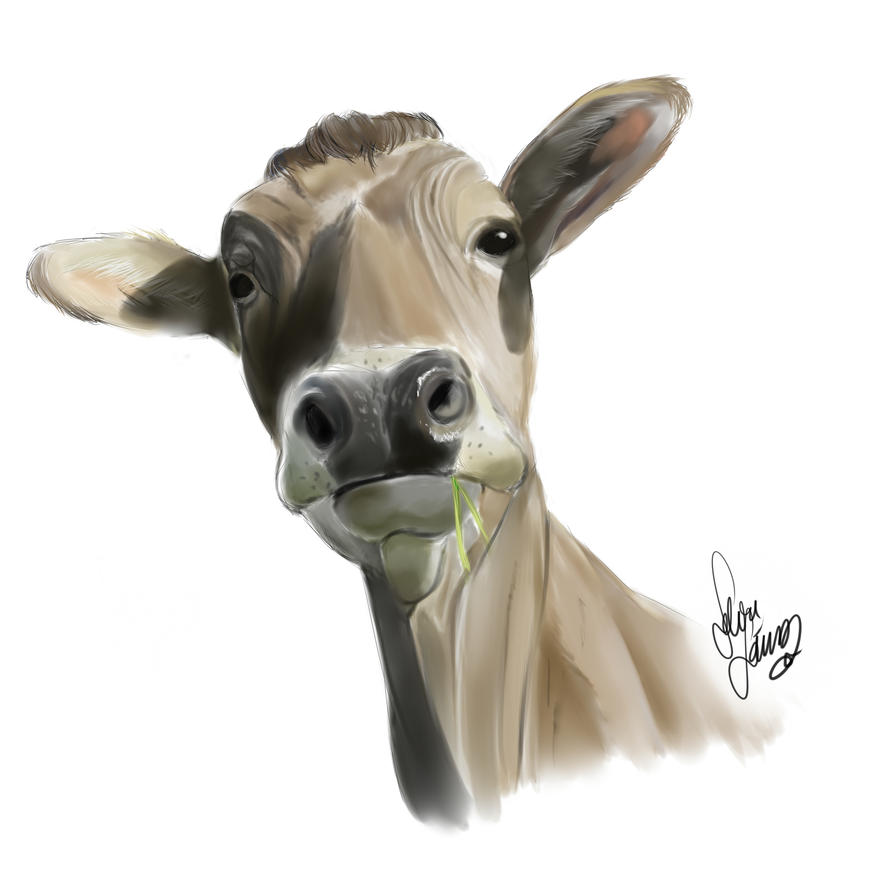 Cow (study) by Drawer1000