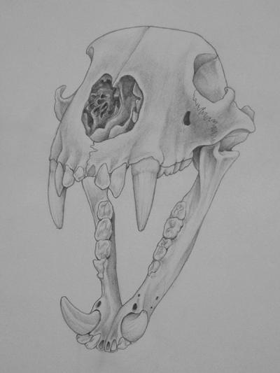 Bear Skull Drawing Black Bear Skul...