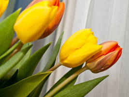 Sparkling Tulips by sandrability