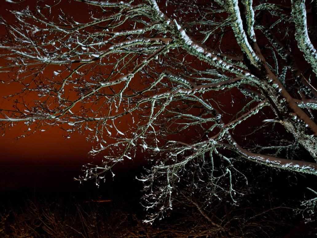 Winter Tree by sandrability