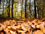 Leaves in the forest by sandrability