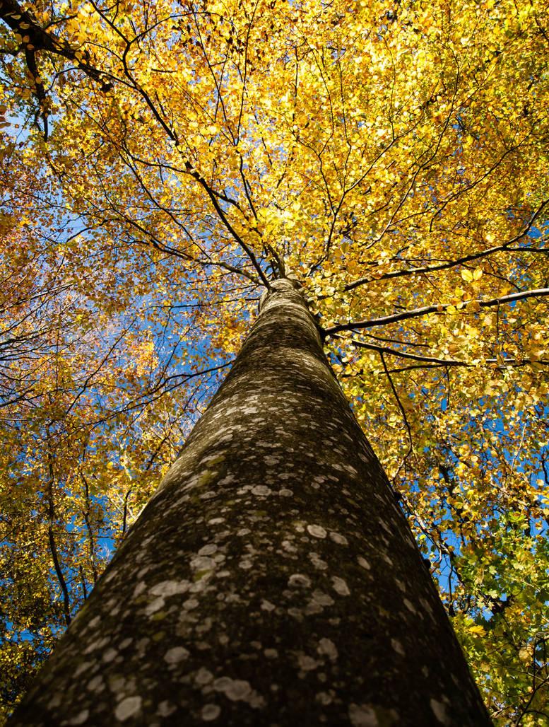 Birch Crown by sandrability
