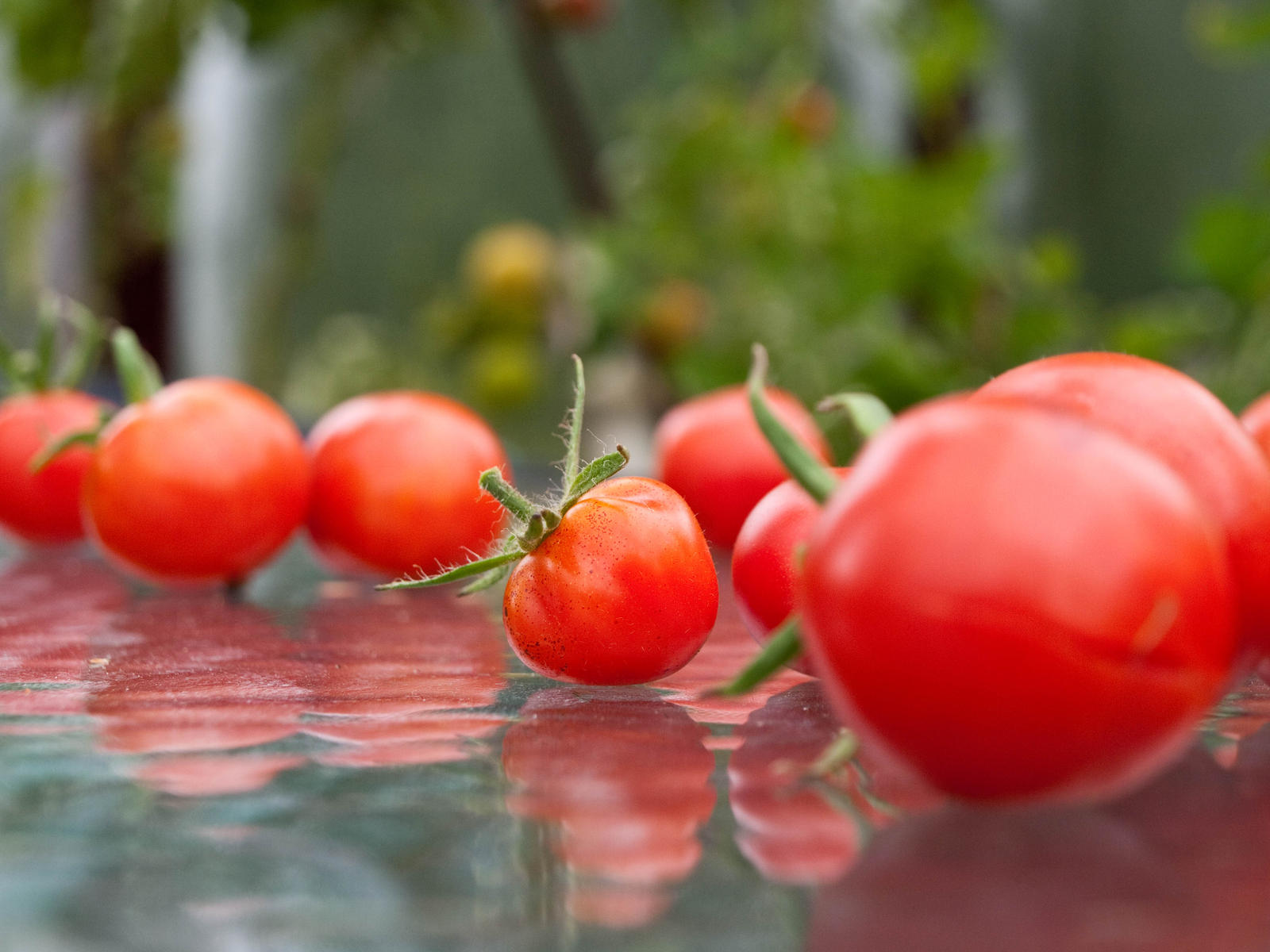 Tomato Party by sandrability