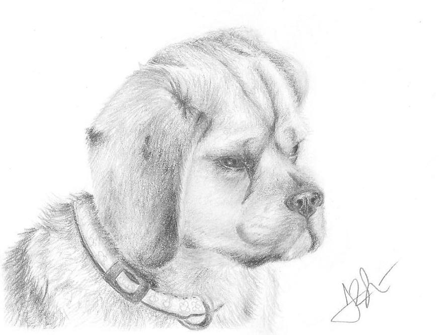 Puggle Dog Names Puggle Dog Coloring Pages