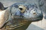 Dragon Drool- 'Komodo Dragon'
